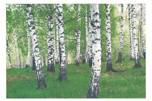 Björkskog, Koivumetsä