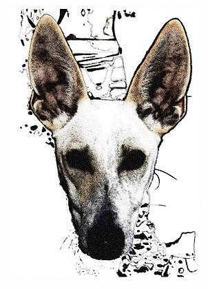 Print watercolor paper Lajka Podenco 16