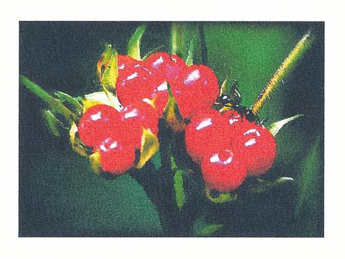 Field berries