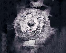 Internet cat(Remixed)