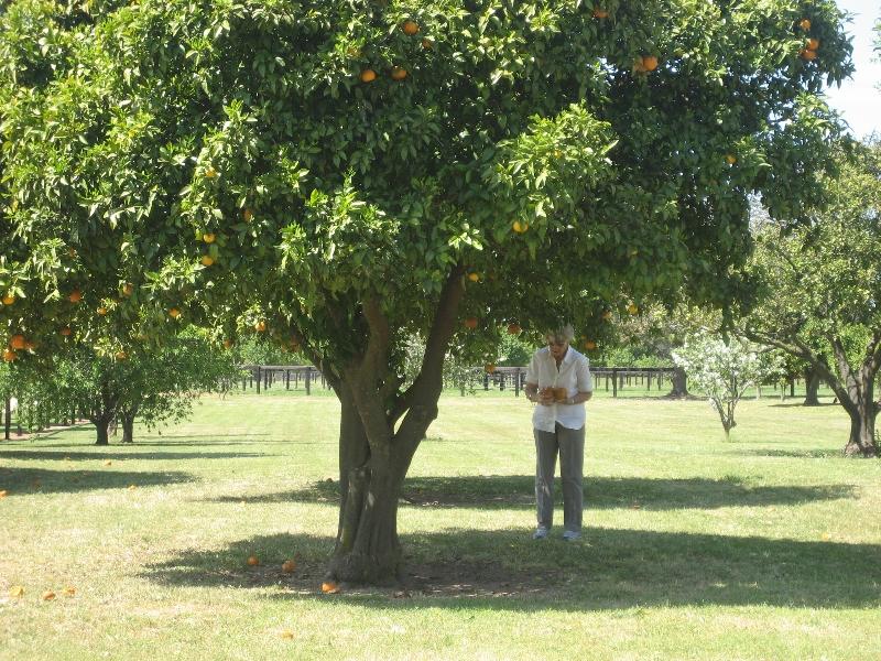 paringa-mums-phone-043.jpg