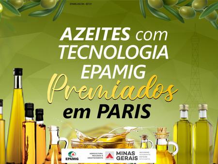Concurso em Paris confirma azeites mineiros entre os melhores do mundo