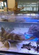 Meet Sharkie!
