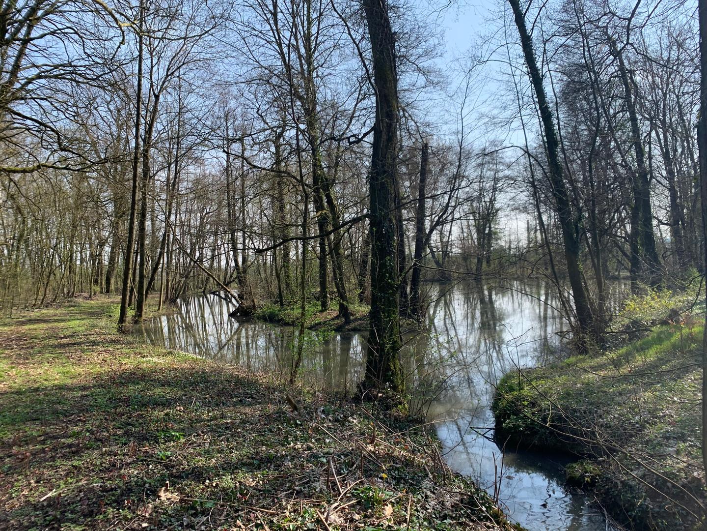 Deuxième étang Château de Bétange