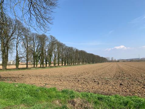 L'allée des maronniers, menacée par le projet d'autoroute A31bis, Château de Bétange