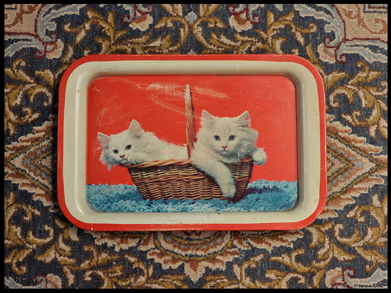 Trays Two Kittens.jpg