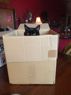 she loves a box