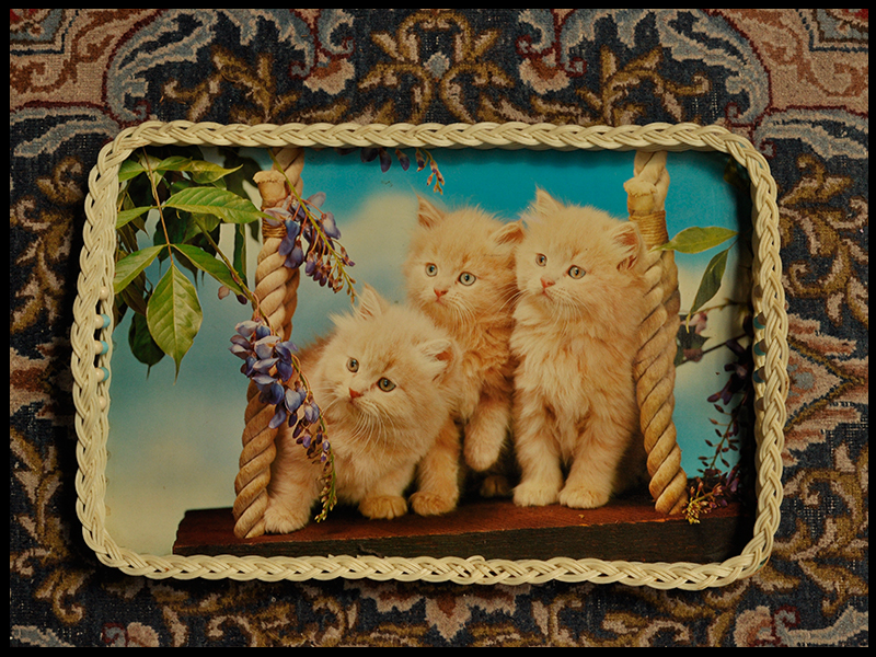 Trays Three kittens.jpg
