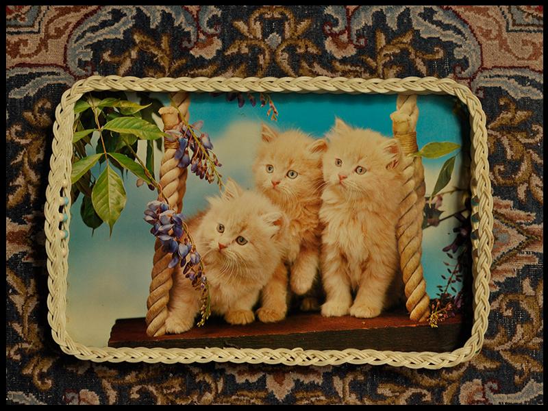 Trays Three kittens.jpg