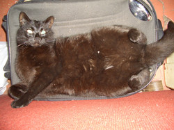 boogs on suitcase
