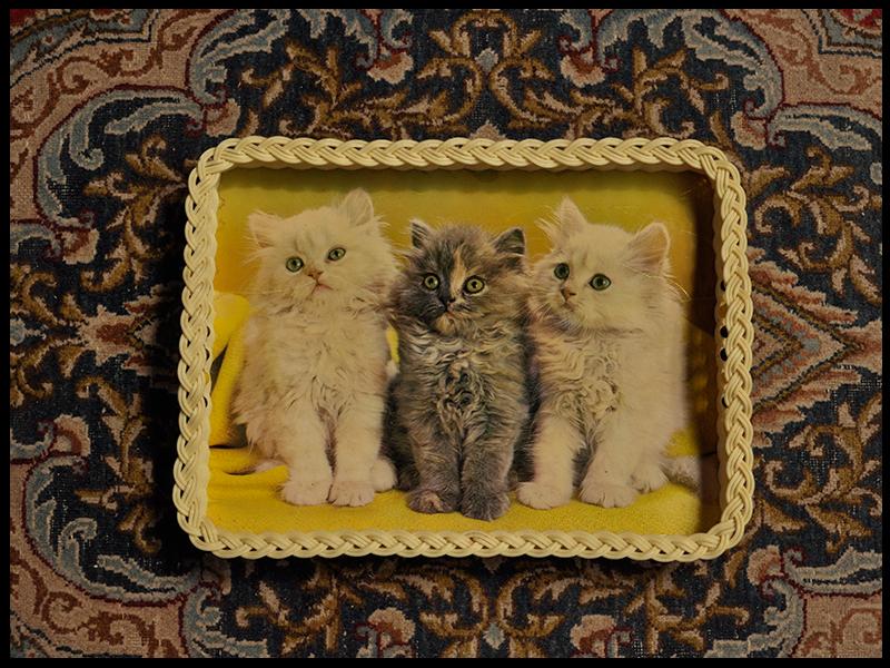 Trays Three kittens 01.jpg