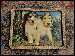 Trays Two dogs.jpg