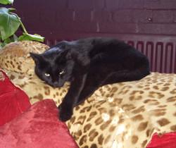 leopard boogie