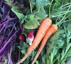 弥兵衛の野菜たち