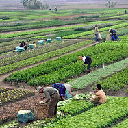 1280px-Agriculture_in_Vietnam_with_farme