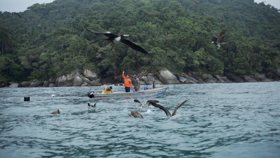 Gaivotas e peixes em Paraty