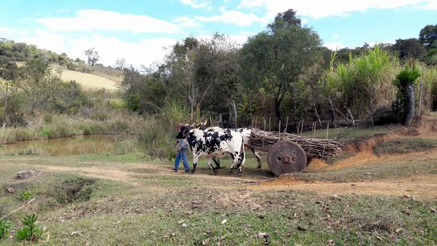 Fazenda Oficio Rapadura