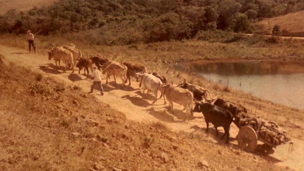 Carro de boi | Ibertioga