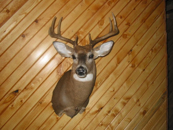 Deer Head Mount >> How Much Does It Cost To Mount A Deer Head
