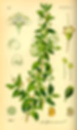 Aromathérapie Lyon