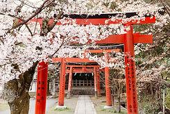 art-photo-yoshida-shrine-torii-i83262.jp