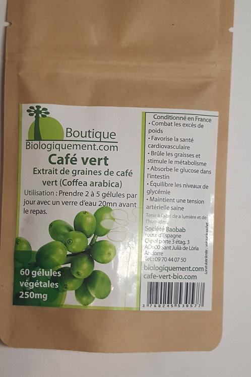 Café vert / Coffea arabica