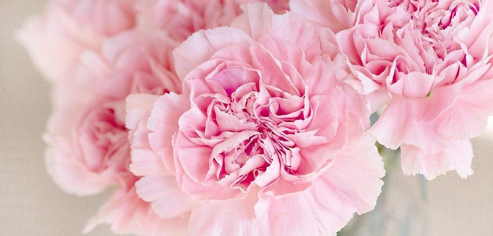 cropped-flowers-1325012_1920.jpg