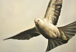 Dirty White Dove