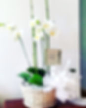 Whats%20App%203113515687_www.floristeria
