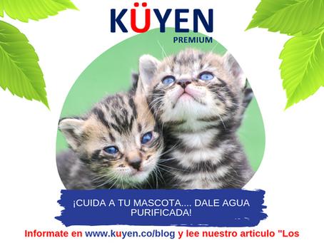 Los gatos y el agua potable. Aclara con esta guía tus dudas sobre la hidratación de los gatos.