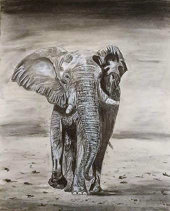 african elephant ($120)11x14 original pe