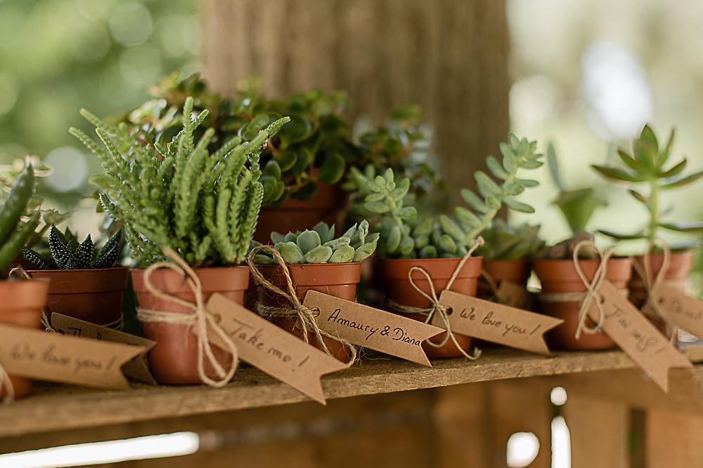 des succulentes comme cadeaux invités au domaine fon de rey - les moments d'où photographie