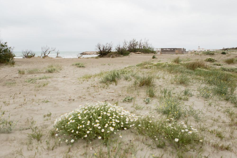les moments d'ou - evjf plage Est des saintes-maries-de-la-mer