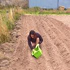 plantation du safran - Aurélie Migneaux