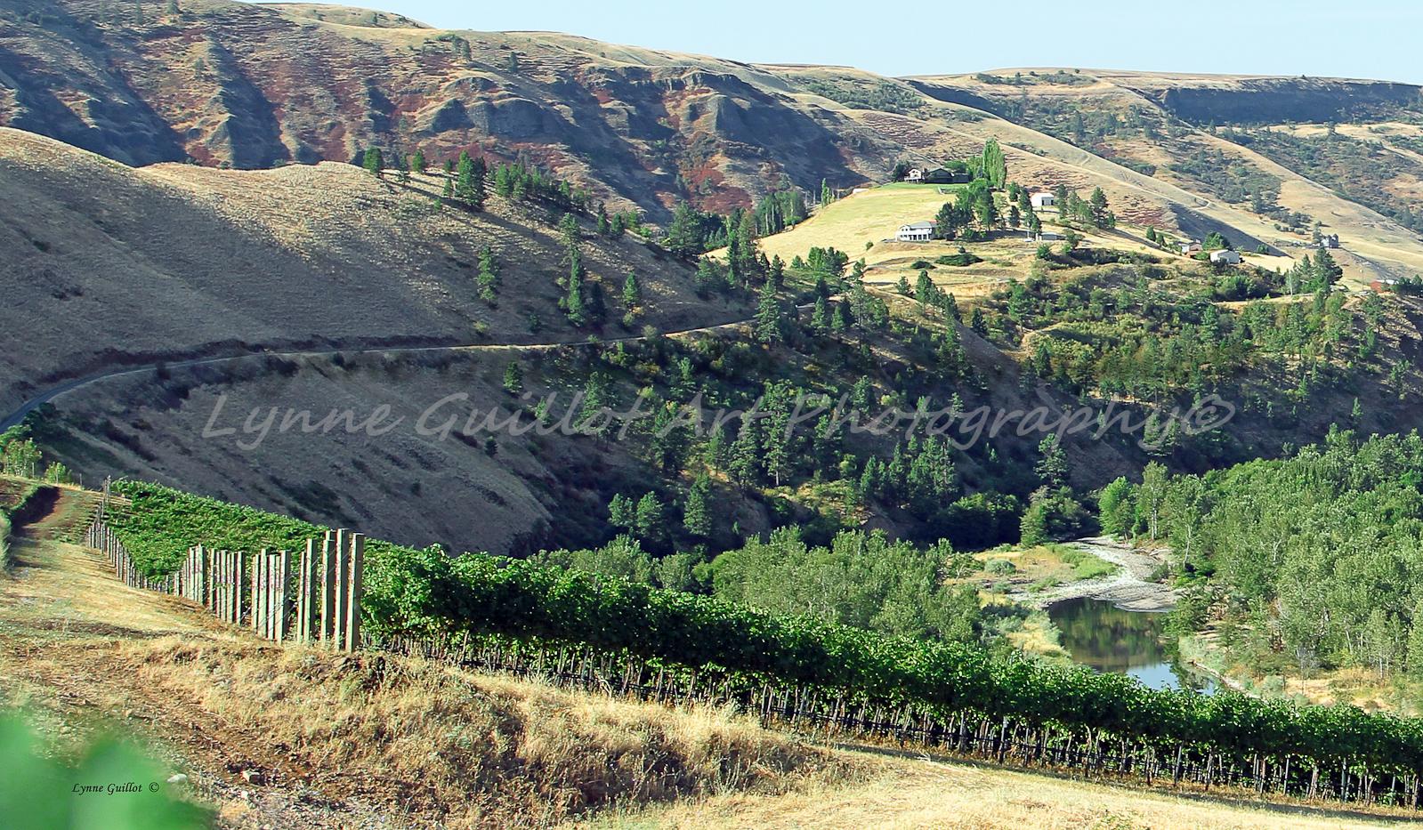 Colter Creek Vineyard