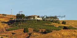 Wasem's Vineyard II