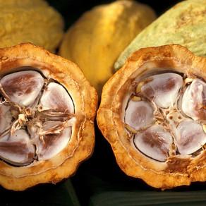 Cacao: la sua storia e la leggenda