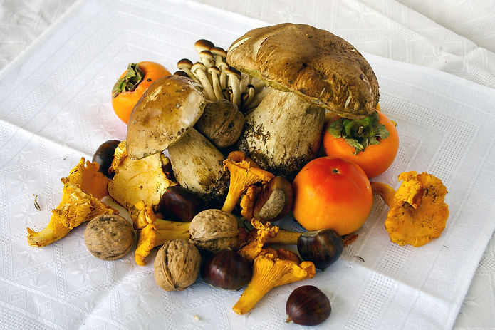 porcini-mushrooms-2833265_1920.jpg