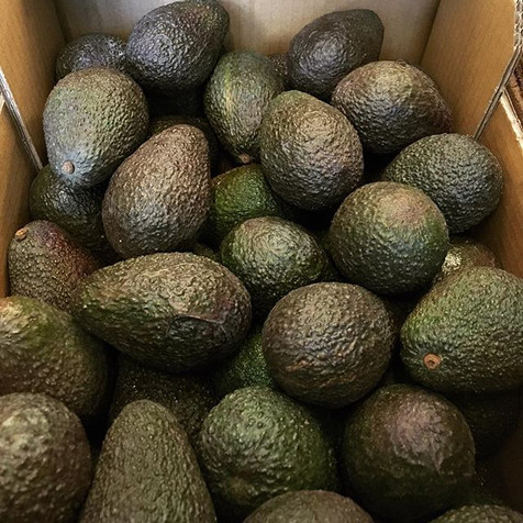 avocados are back.jpg