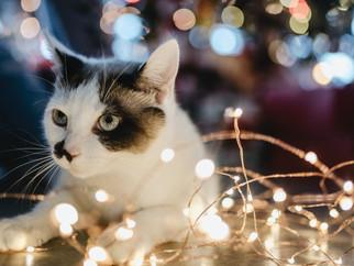 An intuitive Christmas feast?