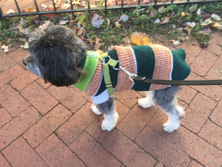 Cold Weather Tips for DC Dogs