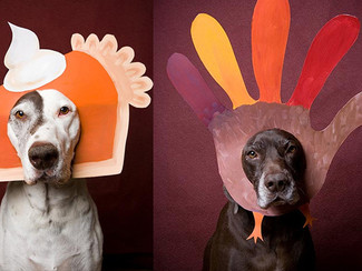 Thanksgiving Dos & Don'ts for Dogs