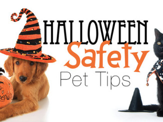 Howl-O-Ween Safety Tips!