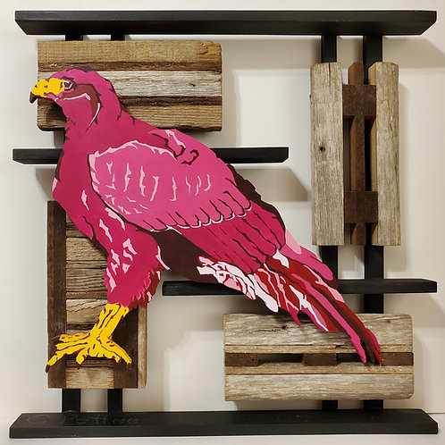Harris's Hawk #2