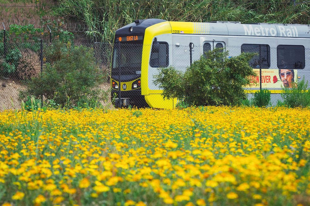 Yellow Metro Rail train passes by a field of yellow flowers