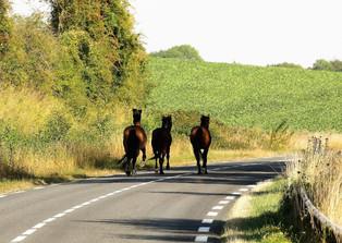 Noxikc'Shop - GIFT - Gaits Replacements Road
