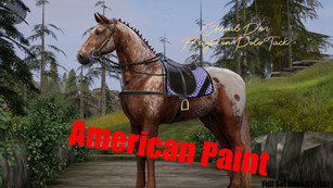 Cheval D'or - Brighton Polo Tack