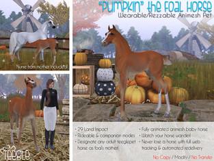 """Pumpkin"" the Foal Horse"