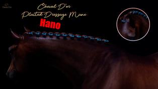 Cheval D'or - Plaited Dressage Mane