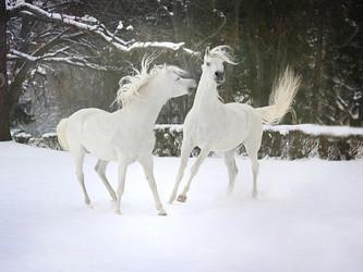 Dandys Farm Update: Horse Transport